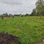 زمین مسکونی کشاورزی همراه با مجوز