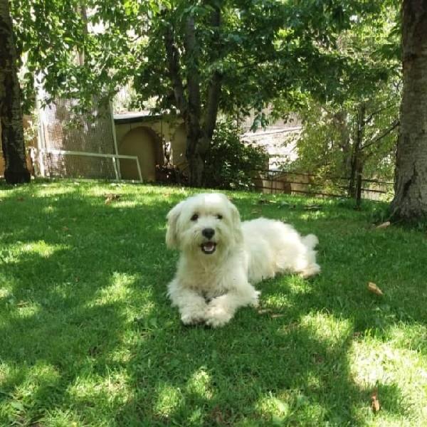 یک سگ سفید آپارتمانی