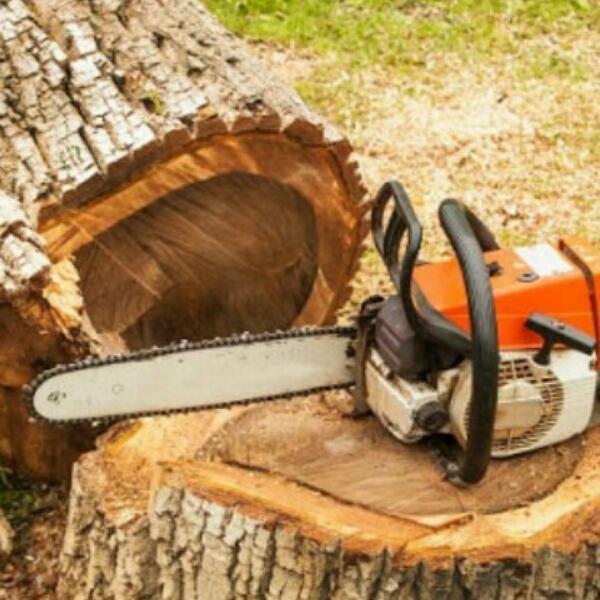 خریدار انواع چوب