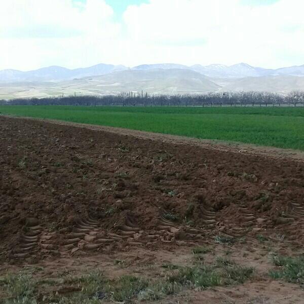 ۱۲۵هکتار باغ انگور وگردو بادوچاه آب ودامداری براتوبان