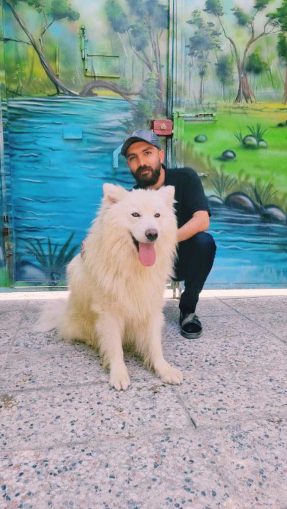 سگ سامویید شناسنامه دار